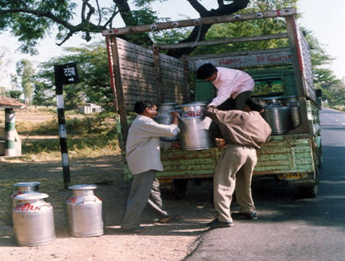 Society people loading the milk cans in milk route vehicle of milk union.