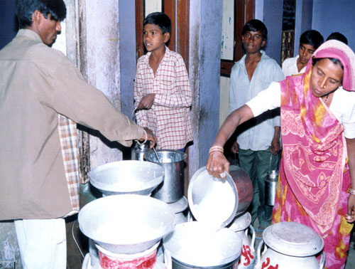 Milk flow at rural based co-operative